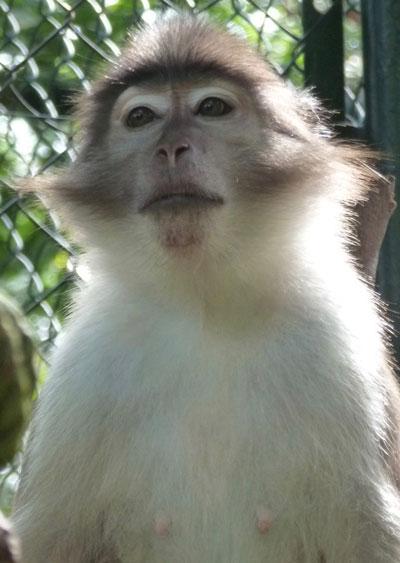Christina Stanley Primate